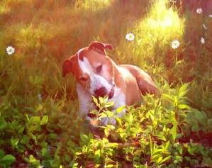 dog-in-daisy-field-paint