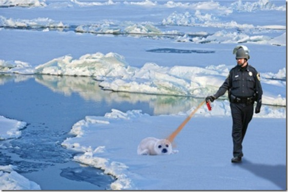 baby-seal-pepper-spray