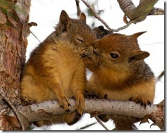squirrel.friends.animals,cute,love,wild,life,animal,kiss-0234b807ffd68088bcbc8b2247324e1d_h
