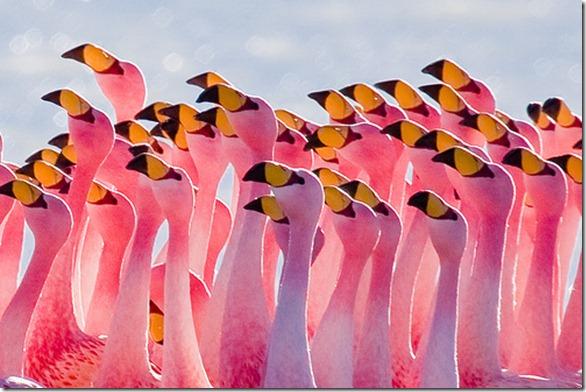 flamingos.2040577615_d11399de53