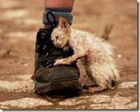 kittenboot.compassion.stray-kitten