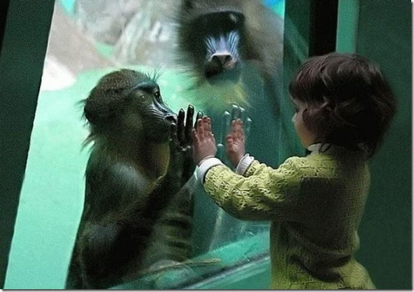 monkeychildhands230147_213498702007602_182263958464410_775441_2260143_n