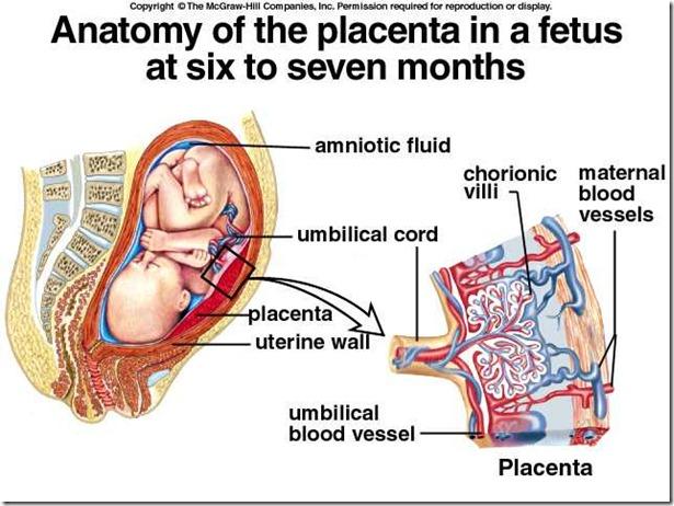 Placenadfata