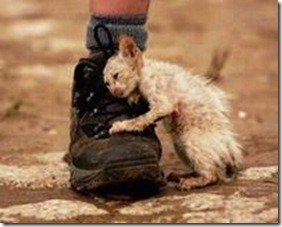 kittenboot.compassion.stray-kitten (2)