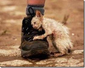kittenboot.compassion.stray-kitten (2)
